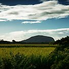 Mt Coolum over the cane fields by MrFocus