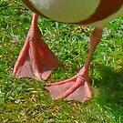 Goose Feet by AnnDixon