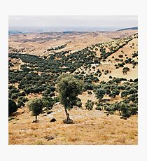 Olive Trees Photographic Print
