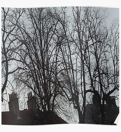 Tall Tree Rooftops Poster