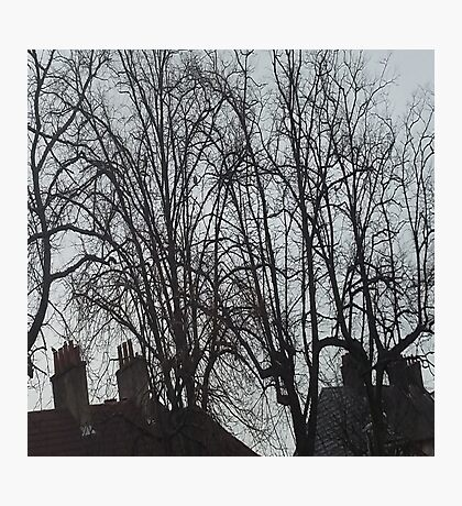 Tall Tree Rooftops Photographic Print