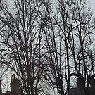 Tall Tree Rooftops by armadillozenith