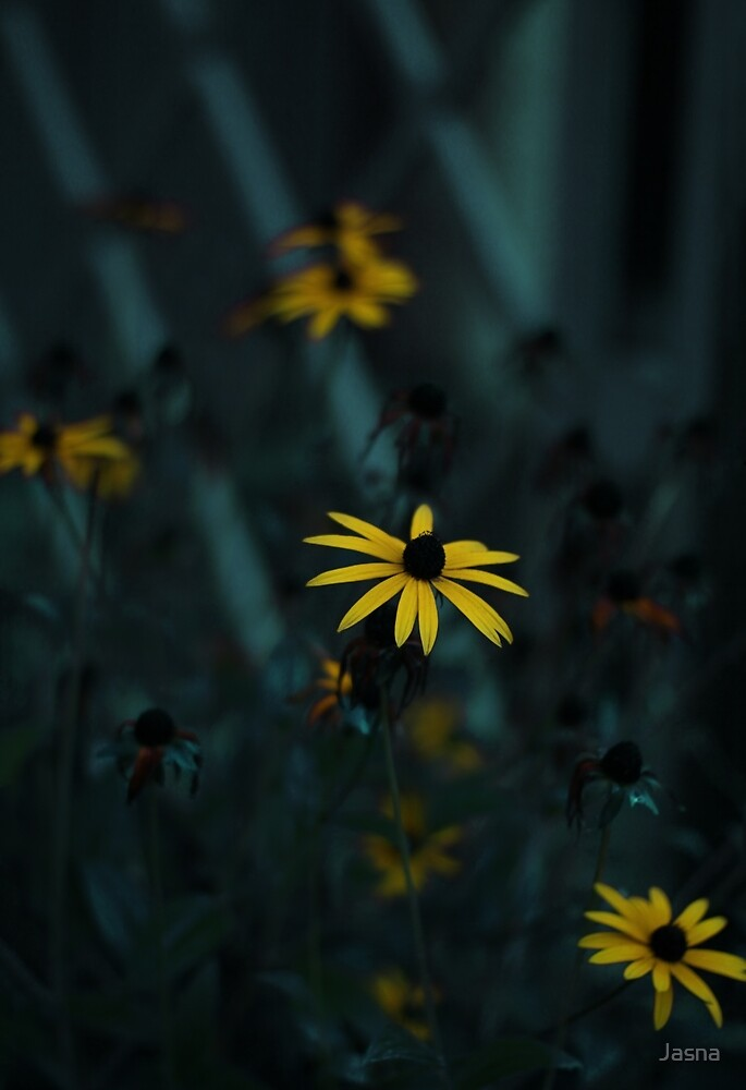 Black Eyed Susan by Jasna
