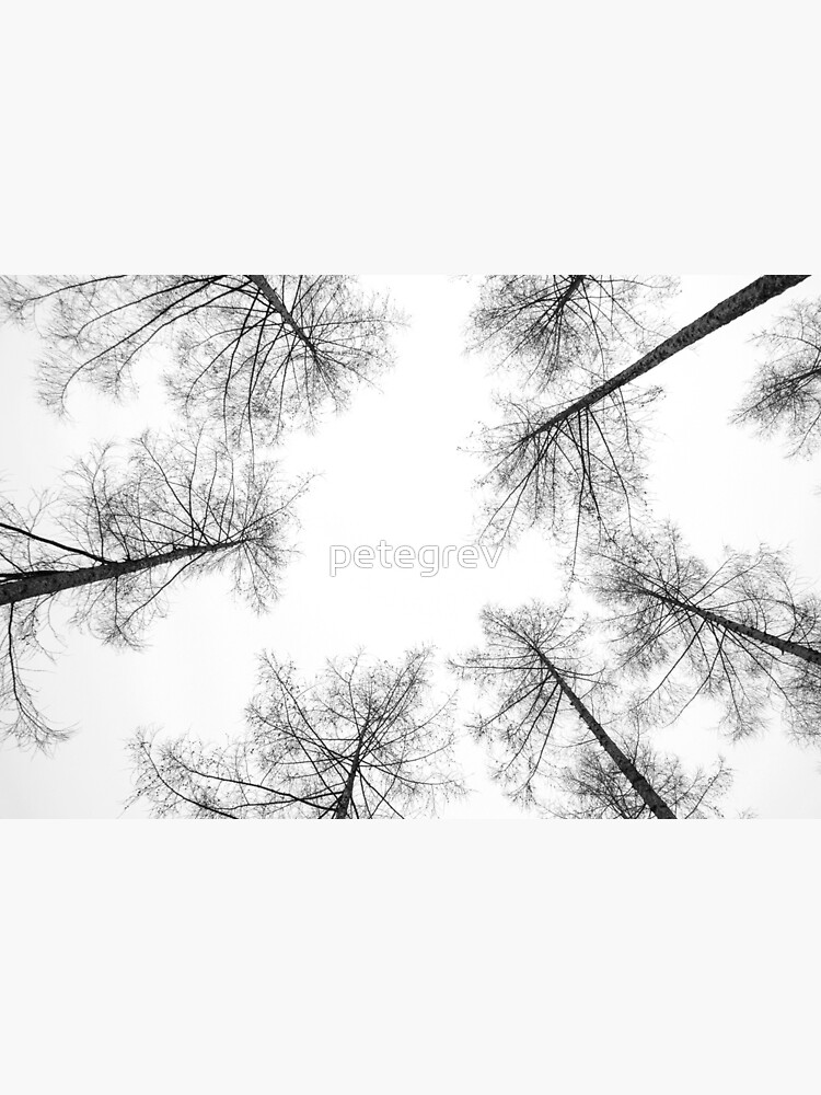 High Amongst the Tree Tops by petegrev