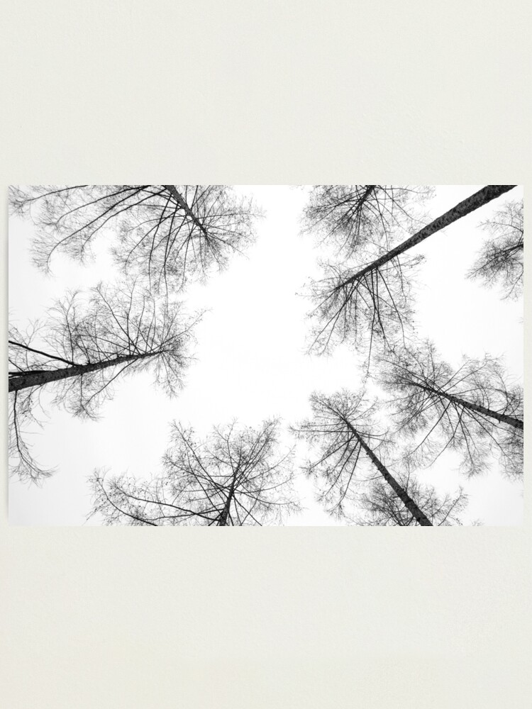 Alternate view of High Amongst the Tree Tops Photographic Print
