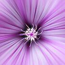 Purple Satin by John Edwards