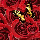 Rose and Butterfly by Scott Mitchell