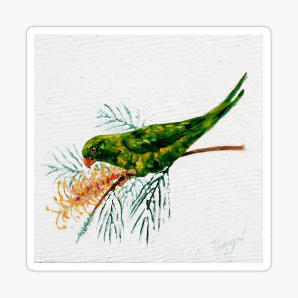 A Scaly-breasted Lorikeet Perched on a Flowering Grevillea Branch  Sticker
