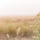 Soft Focus by Shari Mattox-Sherriff