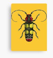 Big Beetle Bug Canvas Print