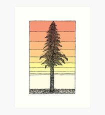 Coastal Redwood Sunset Sketch Art Print