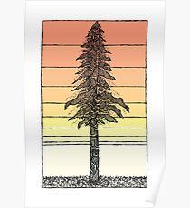 Coastal Redwood Sunset Sketch Poster