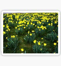 Spring Sprung Sticker