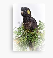 Yellow Tailed Cockatoo * Canvas Print