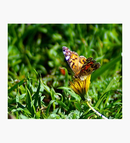 Butterfly Out Gathering Pollen Photographic Print