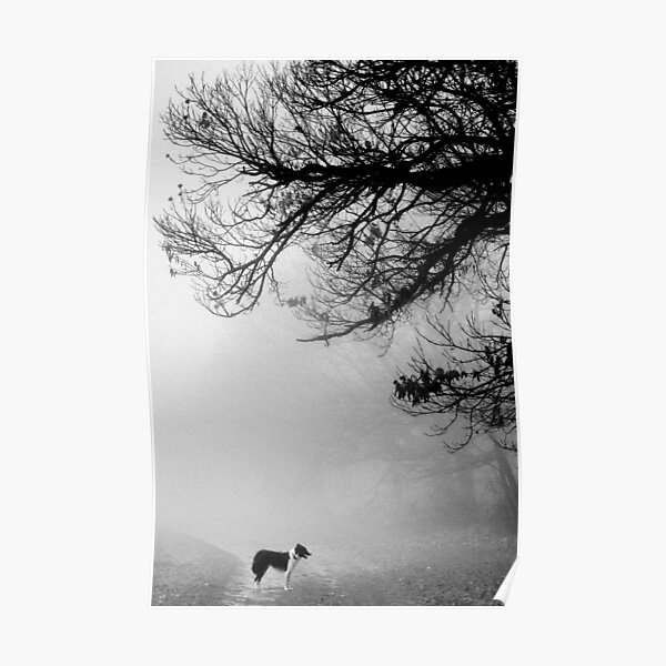 Dog in the mist. Poster