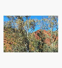 On a beautiful day - Brachina Gorge Photographic Print