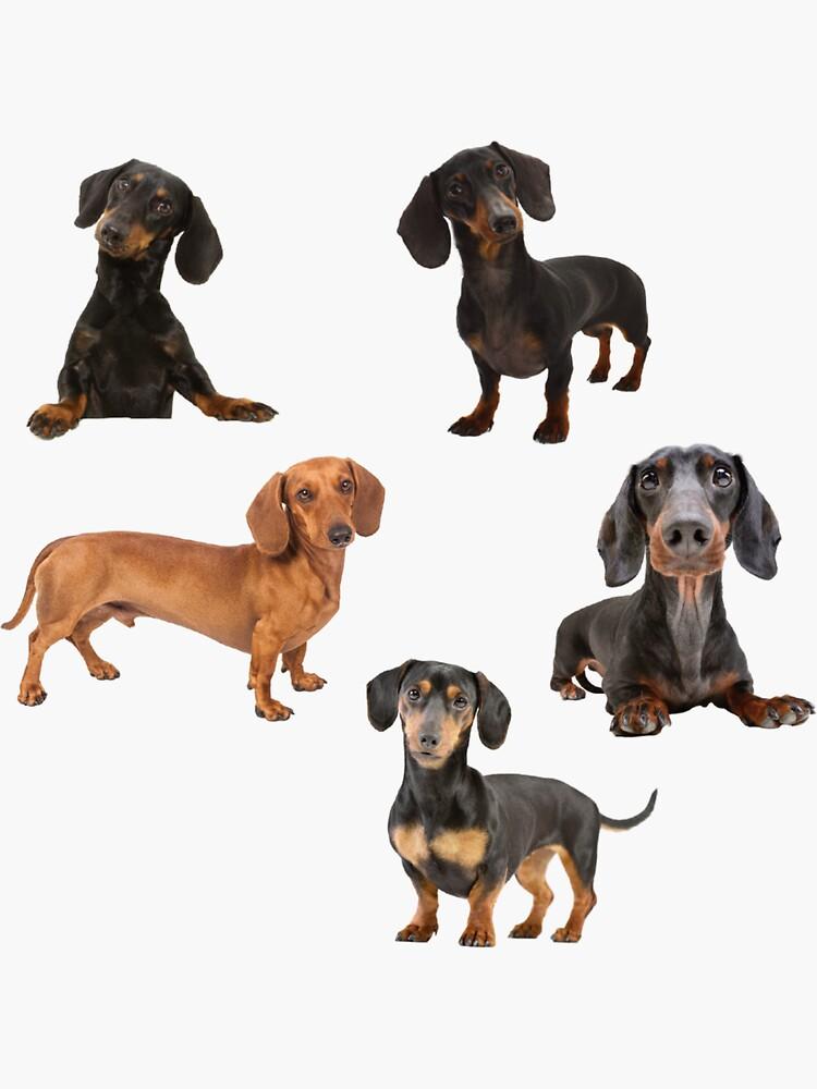 dachshund stickers bundle by familyartz