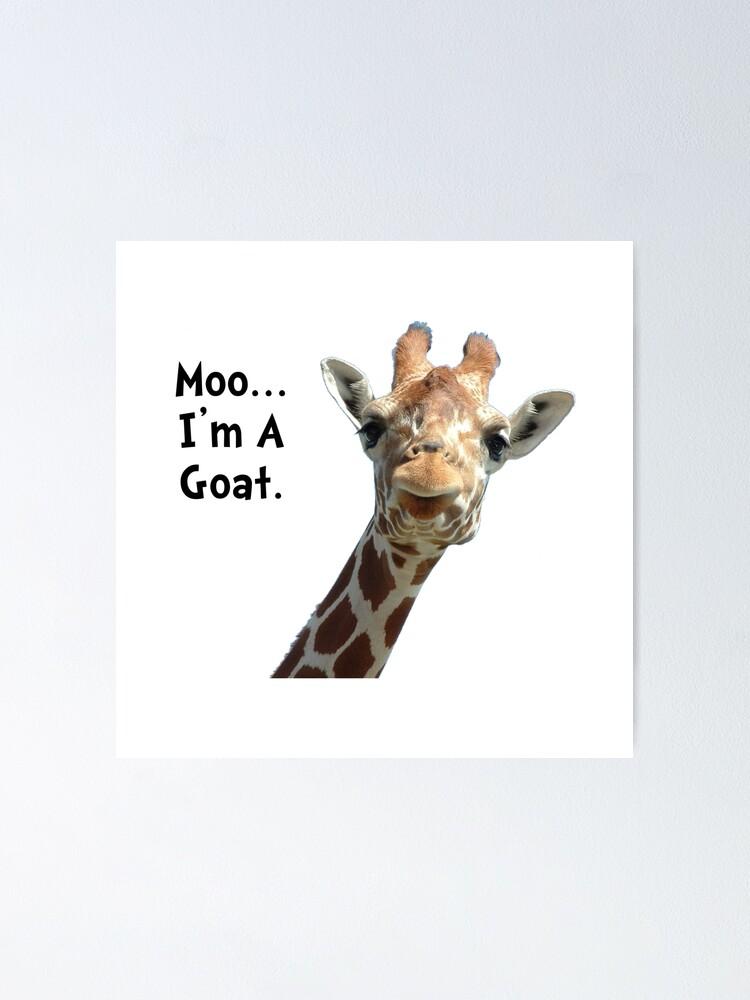 GIRAFFE POSTER Amazing Funny Shot HOT NEW RARE