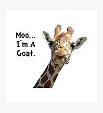 Moo Giraffe Goat Photographic Print