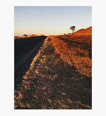 Single Tree in Dry Grassland in Warm Sunset Light Photographic Print