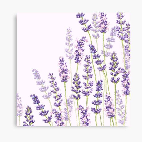 Lavender Fancy - Purple Flowers Canvas Print