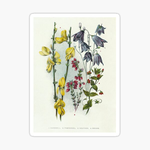 Vintage Harebell And Others Print Sticker