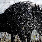 Shaking dog  by Debrak2012