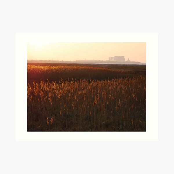 Grasses in the sunset  Art Print