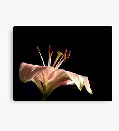 Light on the Lily Canvas Print