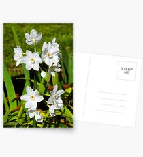 My Amazing Little Paper Whites Postcards