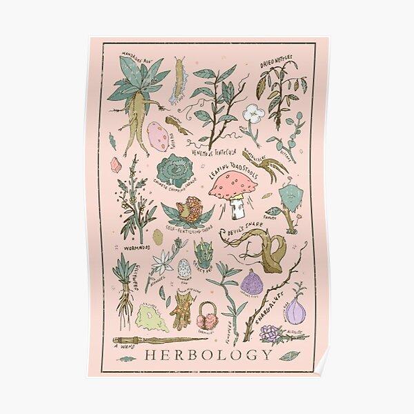 Kräuterkunde Poster