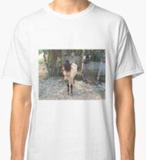 Buckskin Pony Classic T-Shirt