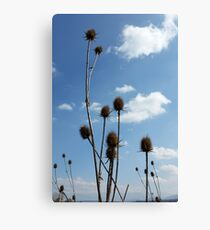 thistles, village and blue sky Canvas Print