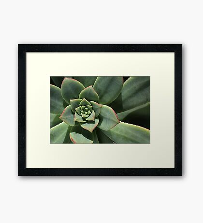 Greens Of Hens And Chicks Framed Print
