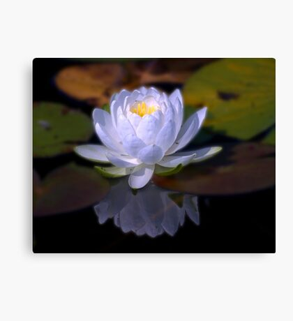 Lily In White Canvas Print