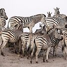 ZEBRA 2 by Anne Young