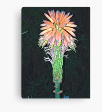 Wacky flower Canvas Print