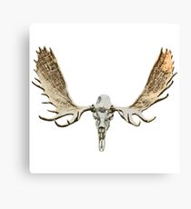 Moose skull Canvas Print