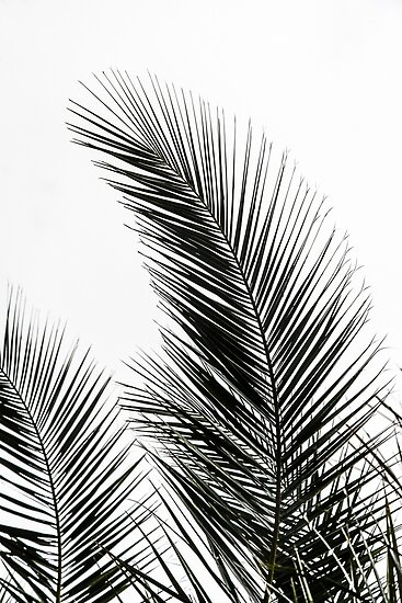 Palm leaves posters by mareike b hmer redbubble for Moderne landschaftsbilder