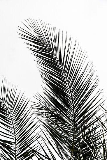 Palm leaves posters by mareike b hmer redbubble for Moderne landschaftsbilder
