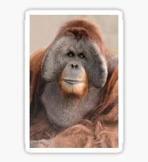 Male Sumatran Orangutan Sticker