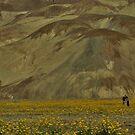 Death Valley Wildflowers 2016 by MaureenS