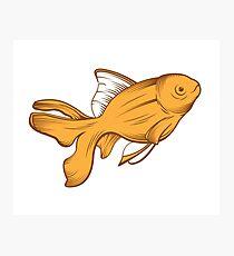 gold fish Photographic Print