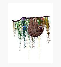 That Sloth Photographic Print