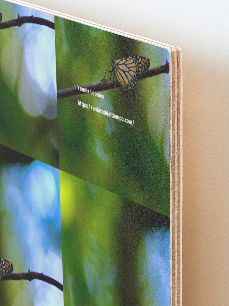 Alternate view of Copy of Monarch butterfly before flying in search of sun By Yannis Lobaina Mounted Print
