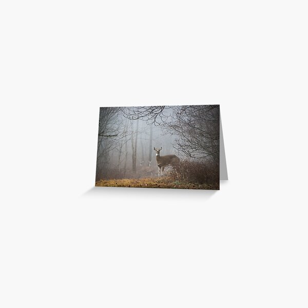 Fog Friends Greeting Card