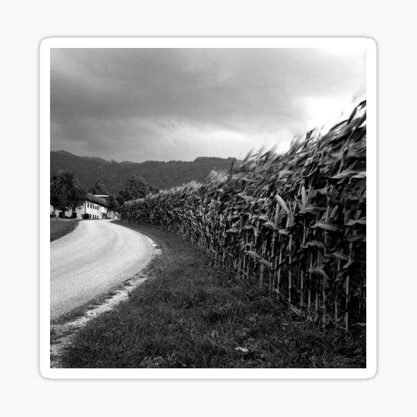Storm brewing over the cornfield Sticker