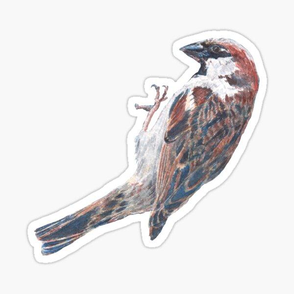 Sparrow on a Bird Feeder Sticker