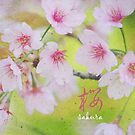 Pale Pink Sakura Cherry Blossoms Vintage Paper Textures by Beverly Claire Kaiya
